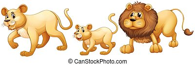 Lion family walking together