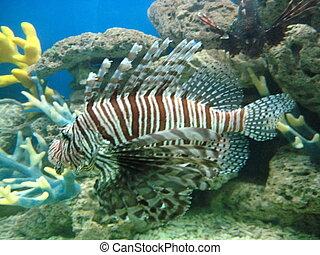 Lion Fish 2 - Lion Fish