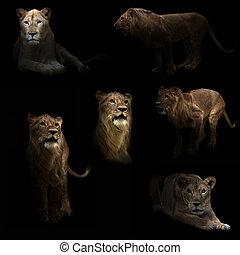 lion hiding in the dark