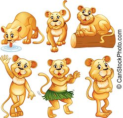 Lion in different activities