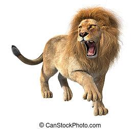 lion, isolé, rugir