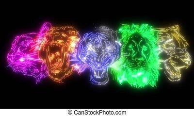 lion, jaguar, set., têtes, tigre, lynx, sauvage, vidéo, ...