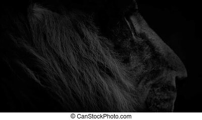 Lion Looks Around With Fiery Eyes Abstract
