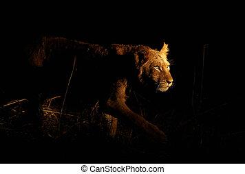 lion, marcher dignement