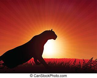 Lion on Sunset Background