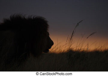 Lion Outline in the Grass