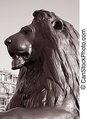 Lion part of Nelsons Column Monument in Trafalgar Square, London, England, UK