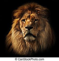 lion, portrait, à, riche, crinière, sur, noir