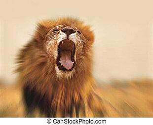 Lion - Roaring lion
