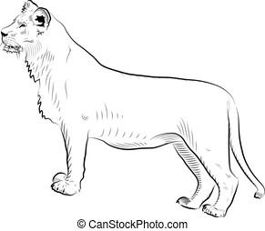 lion., schizzo