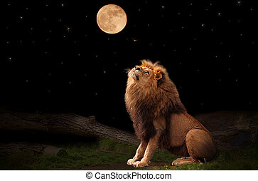 Lion - A lion looking at the moon