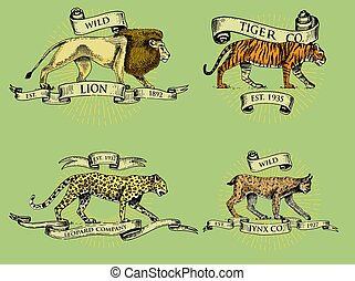 lion tiger lynx and leopard logos, emblems or badges with wild animals and banners or ribbons in vintage, retro old style, hand drawn engraving. sketch
