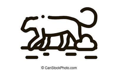 lion wild animal Icon Animation. black lion wild animal animated icon on white background