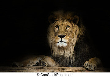 Lion with a fixed look.