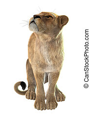 Lioness - 3D digital render of a lioness looking up isolated...
