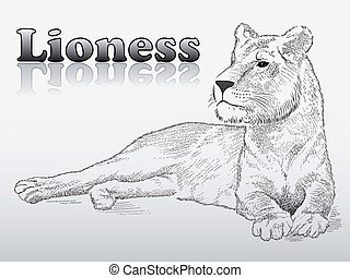 Lioness, tattoo - Vector lioness represented in the form of...