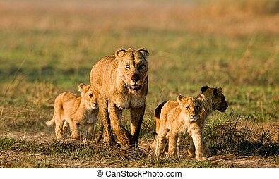 Lioness with three cubs.