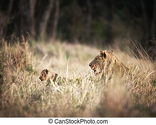Lioness with young cub