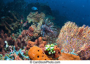 Lionfish in Bali
