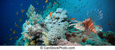 Lionfish on the coral reef underwater - Lionfish among ...