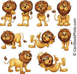 lions, dans, différent, positions