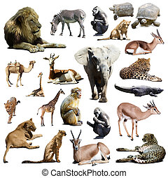 lions, elephant and other African animals