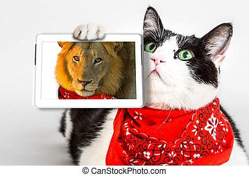 Lions Heart Cat - Brave cat with red bandana, showing a ...
