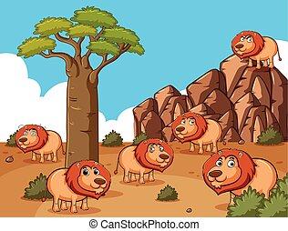 Lions living in the desert field