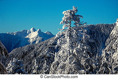 Snowy winter forest in mountains blue sky day lions peaks