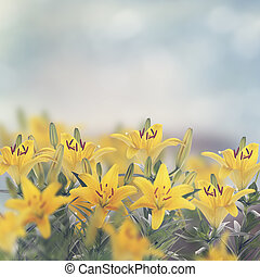 lirio amarillo, flores