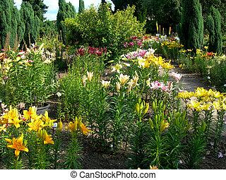 lis, jardin