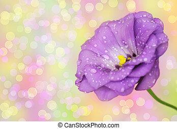 lisianthus, bloem, op, defocused, achtergrond