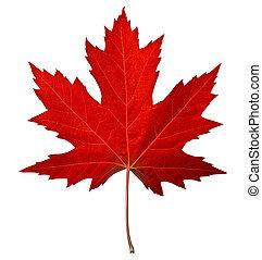 list, červené šaty javor