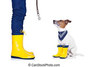 listo, perro, lluvia, caminata