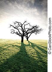 lit, árbol, espalda, manzana