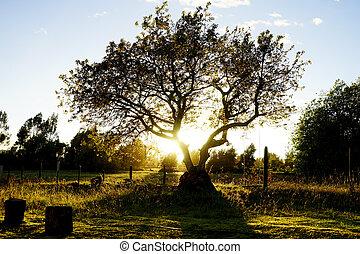 lit, espalda, árbol