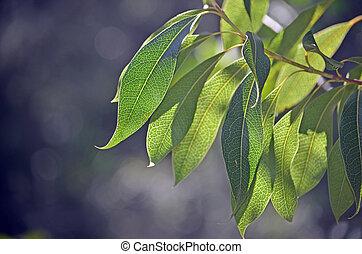 lit, leñoso, hojas, pera, espalda