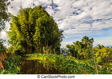 lit, lumière, forêt bambou, matin