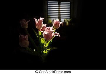 lit, rosa, espalda, tulipanes