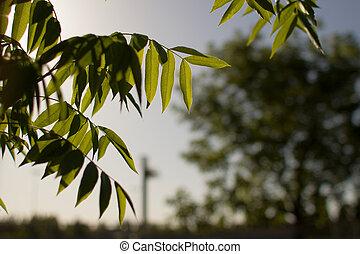 lit, sauce, hojas, árbol, espalda