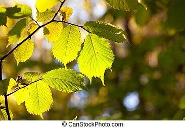 lit, soleil, feuilles, vert, frais