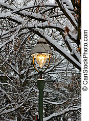 Lit Street Light among Snowy Branches in Winter