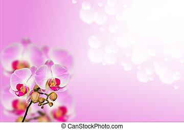 liten, filial, av, blid, orkidéer, på, lutning, bokeh