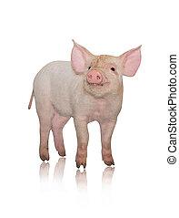 liten, gris