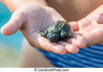liten, sköldpadda, in, barns, räcker