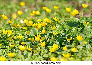 litet, gul blommar