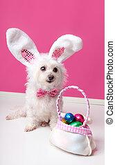 litet, hund, med, a, väska av, choklad påsk eggar