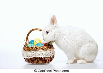 litet, påsk kanin, in, den, korg