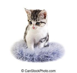 litet, utrymme, text, bakgrund, kattunge, vit, förtjusande
