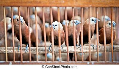 litle, oiseaux, dans, les, cage.